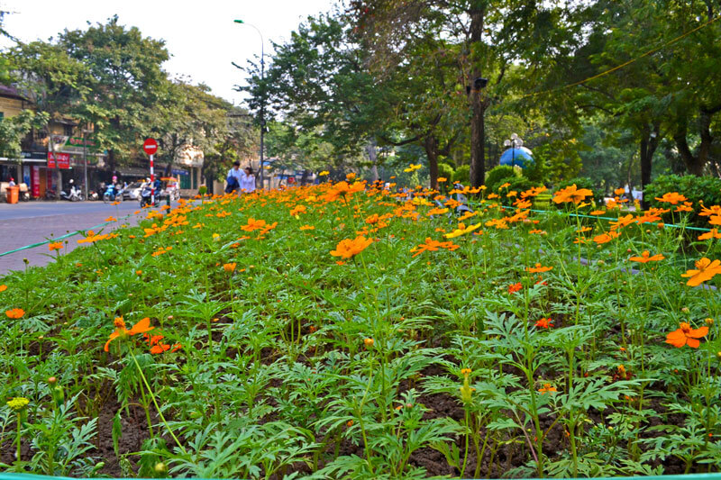 Flower by Ho Hoan Kiem during Tet - Source: What To Do in Hanoi