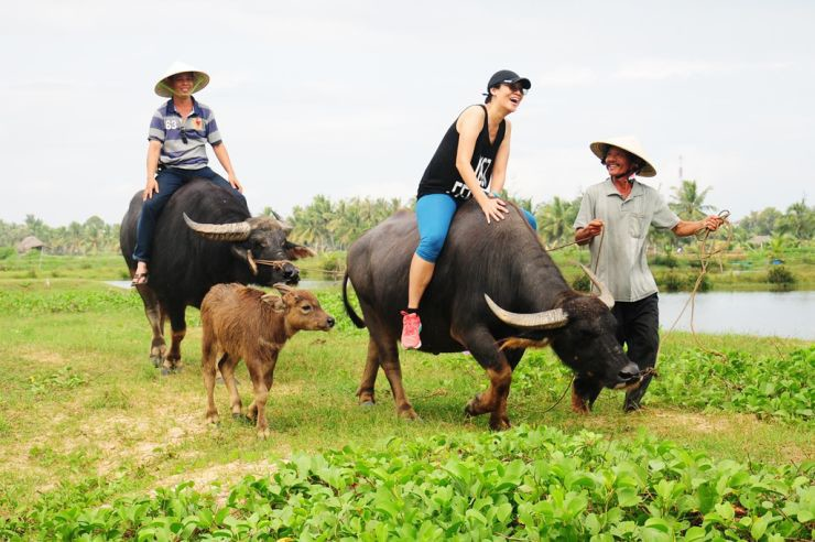 Riding Buffalo in Hoi An - Source: Travel Asia